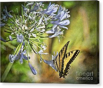 Backyard Nature Canvas Print by Peggy Hughes