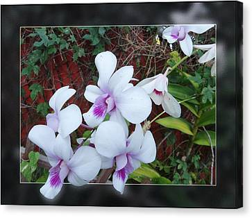 Canvas Print featuring the photograph Backyard Orchid Two by Ginny Schmidt