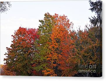 Canvas Print featuring the photograph Backyard Trees by Judy Wolinsky