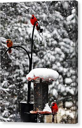 Backyard Winter Wonderland 2  Canvas Print