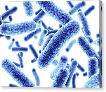 Bacteria Canvas Print by Alfred Pasieka