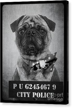 Bad Dog Canvas Print by Edward Fielding