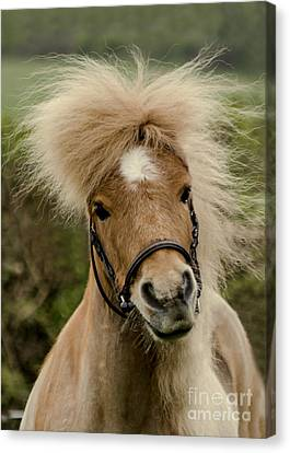 Bad Hair Day 2 Canvas Print by Linsey Williams