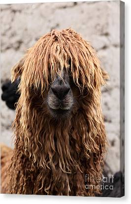 Bad Hair Day Canvas Print by James Brunker