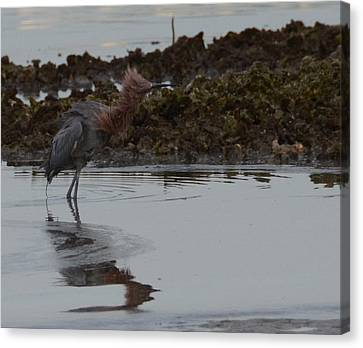 Bad Hair Day Canvas Print by Julie Cameron