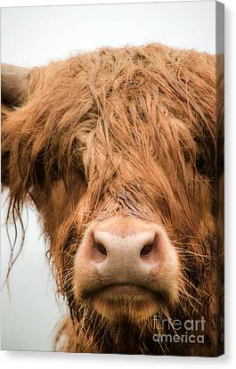 Bad Hair Day Canvas Print by Linsey Williams