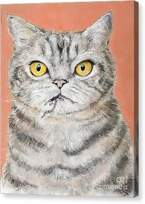 Bad Puddy Canvas Print by Star  Mudersbach