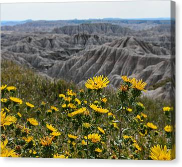 Badlands Flowers Canvas Print by Robin Williams