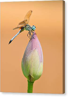 Balance Of Nature Canvas Print
