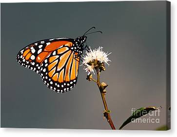 Balancing Act Canvas Print by James Brunker