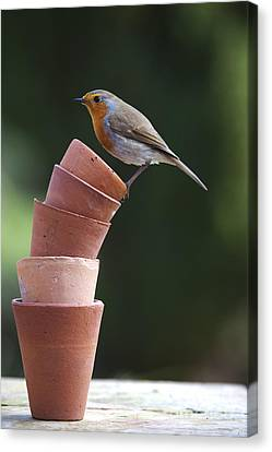 Its A Balancing Act Canvas Print by Tim Gainey