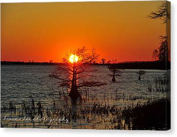 Bald Cypress At Sunset Canvas Print by Bruce A Lee