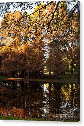 Autum Abstract Canvas Print - Bald Cypress Autumn by Lee Craig