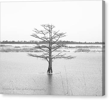 Bald Cypress Canvas Print by Bruce A Lee