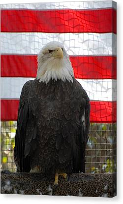 Bald Eagle 265 Canvas Print by Joyce StJames