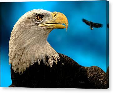 Bald Eagle And Fledgling  Canvas Print by Bob Orsillo