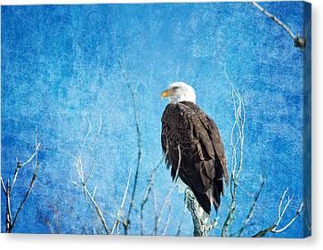 Bald Eagle Blues Canvas Print by James BO  Insogna