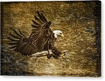 Bald Eagle Capture Canvas Print