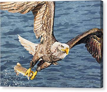 Canvas Print featuring the drawing Bald Eagle Fishing  by Aaron Spong