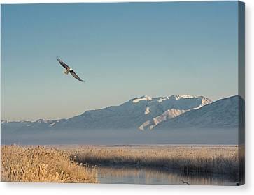 Great Salt Lake Canvas Print - Bald Eagle Flying Over Farmington Bay by Howie Garber