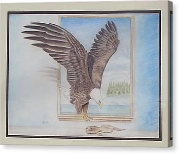 Bald Eagle Having Lunch Canvas Print by Parmjit Gill