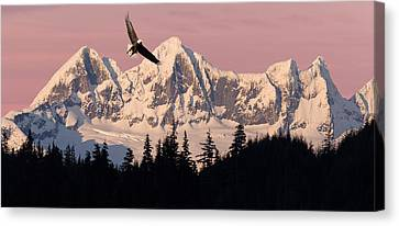 Bald Eagle In Flight At Sunset With Canvas Print