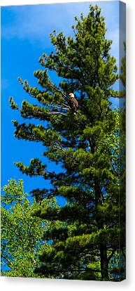 Canvas Print featuring the photograph Bald Eagle   by Lars Lentz