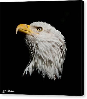 Bald Eagle Looking Skyward Canvas Print