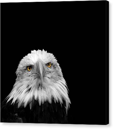 Bald Eagle Canvas Print by Mark Rogan