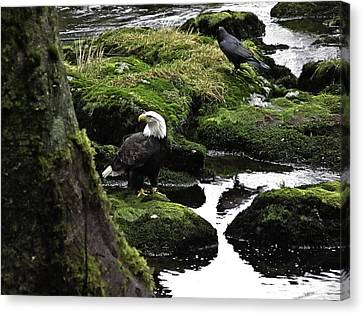 Canvas Print featuring the pyrography Bald Eagle On The Creek. by Timothy Latta