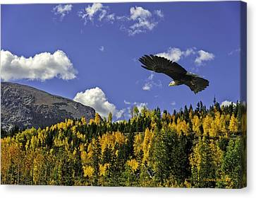 Bald Eagle Over The Aspen Canvas Print
