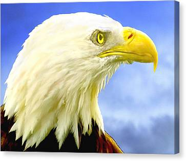 Bald Eagle Painting For Sale Canvas Print