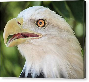 Canvas Print featuring the photograph American Bald Eagle Portrait - Bright Eye by Patti Deters