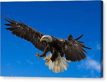 Bald Eagle Canvas Print by Scott Carruthers