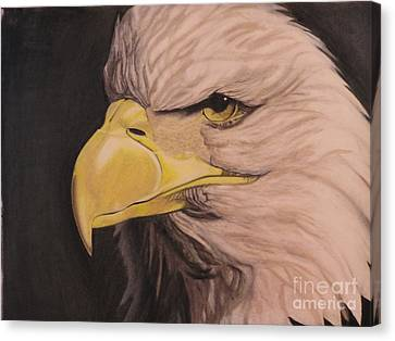 Bald Eagle Canvas Print by Wil Golden