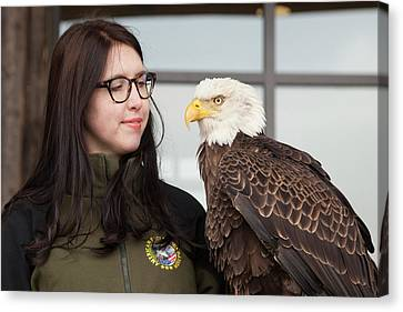 Bald Eagle With Handler Canvas Print by Jim West