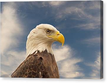 Bald Eagle With Piercing Eyes 1 Canvas Print by Douglas Barnett