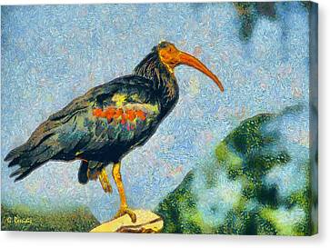 Bald Ibis Canvas Print by George Rossidis