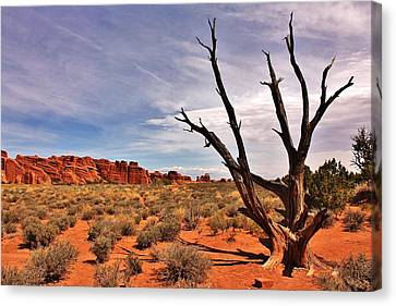 Bald Tree At Arches  Canvas Print by Benjamin Yeager