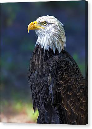 Baldy On Lookout Canvas Print by Bill Tiepelman