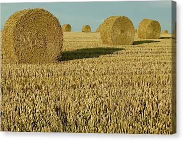 Bales Of Grain At Harvest Time Canvas Print by Cyril Ruoso