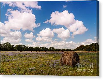 Bales Of Hale - Quintessential Texas Hill Country - Luckenback Canvas Print