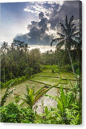 Bali Rice Terraces Canvas Print by Didier Marti