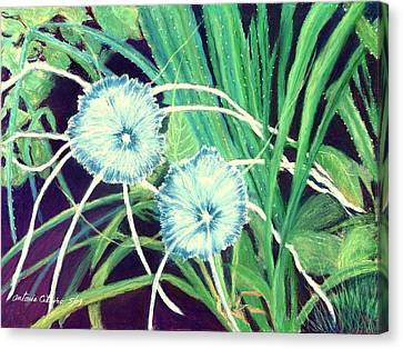 Bali White Spider Lily's  Pastel Canvas Print by Antonia Citrino