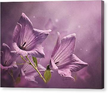 Canvas Print featuring the photograph Balloon Flowers by Ann Lauwers