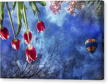 Inverted Canvas Print - Balloonist  by Betsy Knapp
