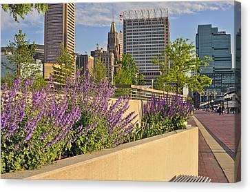 Canvas Print featuring the photograph Baltimore Inner Harbor With Flowers by Marianne Campolongo