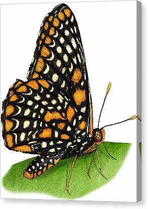Checkerspot Canvas Print - Baltimore Checkerspot Butterfly by Roger Hall