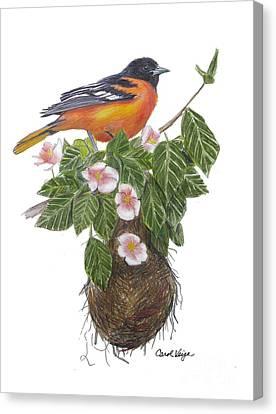 Baltimore Oriole Canvas Print by Carol Veiga