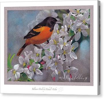 Orioles Canvas Print - Baltimore Oriole by Michael  Weber